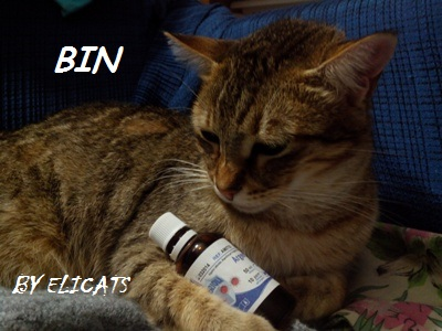 Colloidal Silver Gold Copper for cats and dogs, Colloidal Silver Gold Copper for cats and dogs