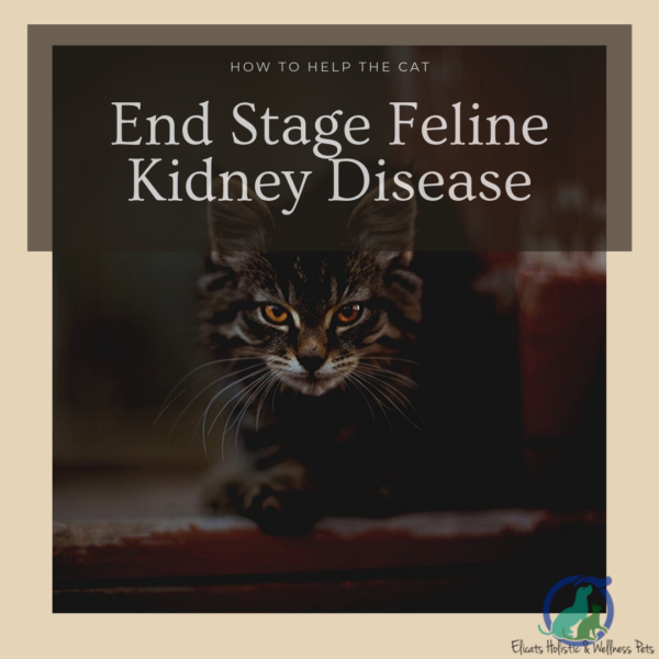 stages of kidney failure in cats