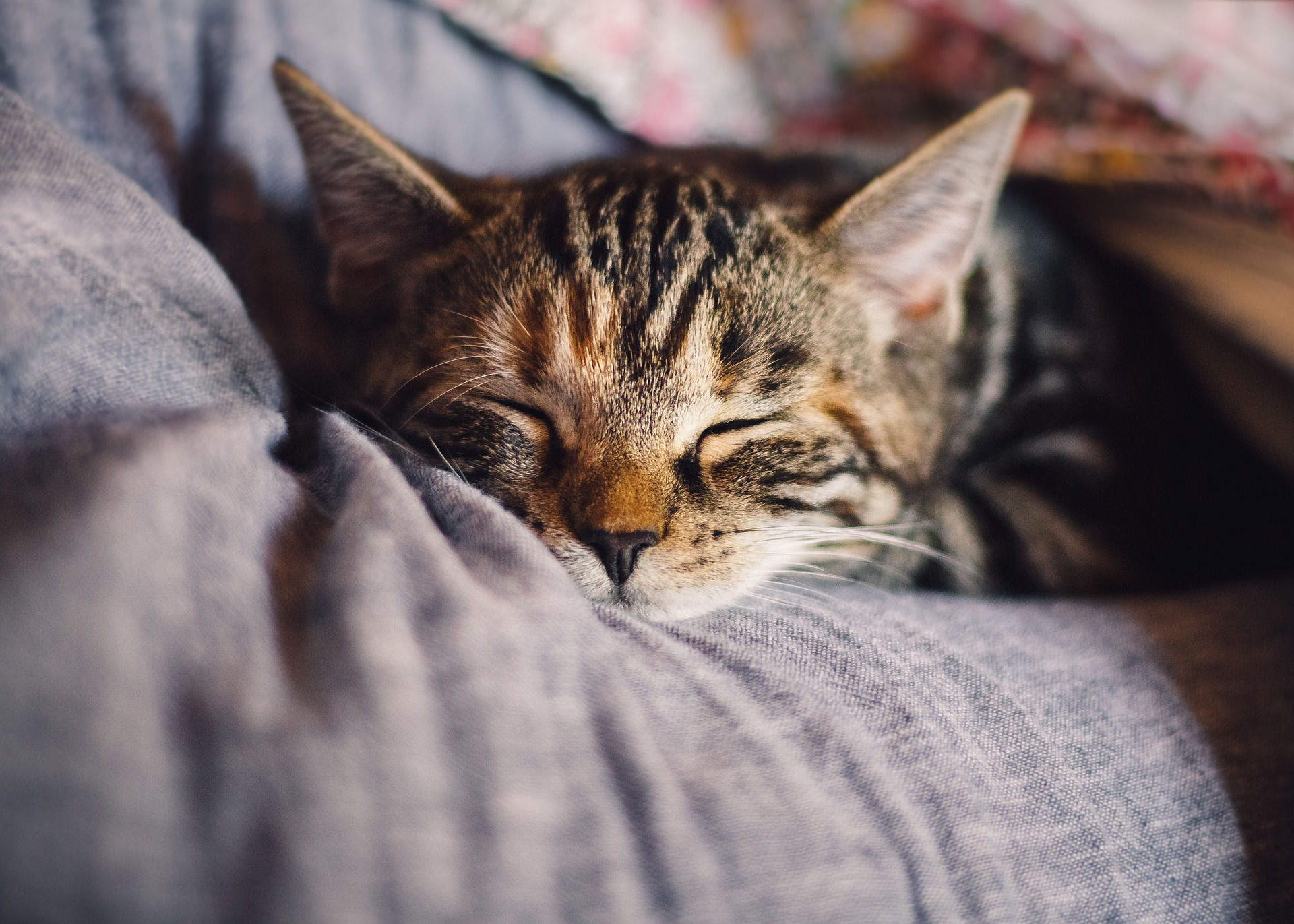Cats Chronic Kidney Disease Stage 1 And 2 How To Manage Elicats Com